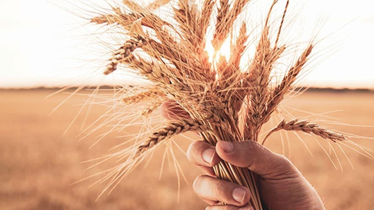 Suudi Arabistan ilk kez Ukrayna'dan buğday ithal edecek