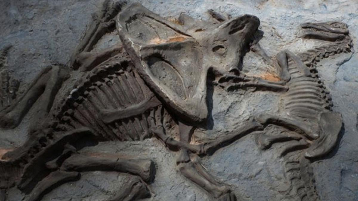 66 milyon yıllık... Tuhaf ve benzersiz dediler!
