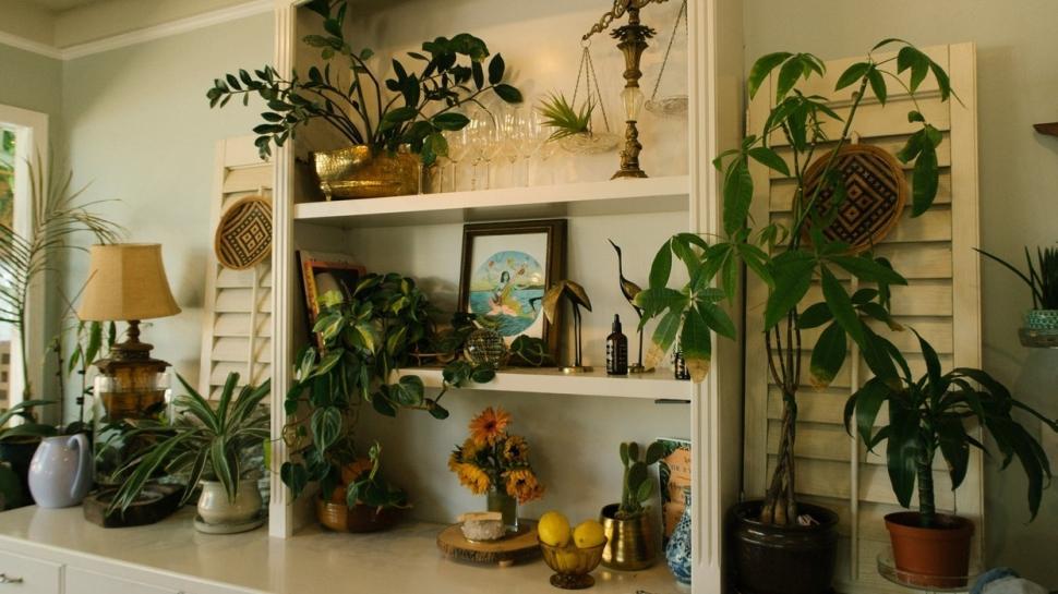 Evin havasını değiştiren bitkiler  Ev için dekoratif bitki çeşitleri