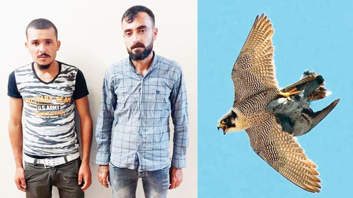 Zehir ararken ölü 'Gökdoğan' buldular