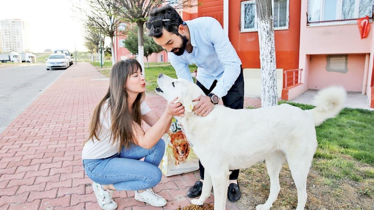 Mağdur kedi köpek arayışı