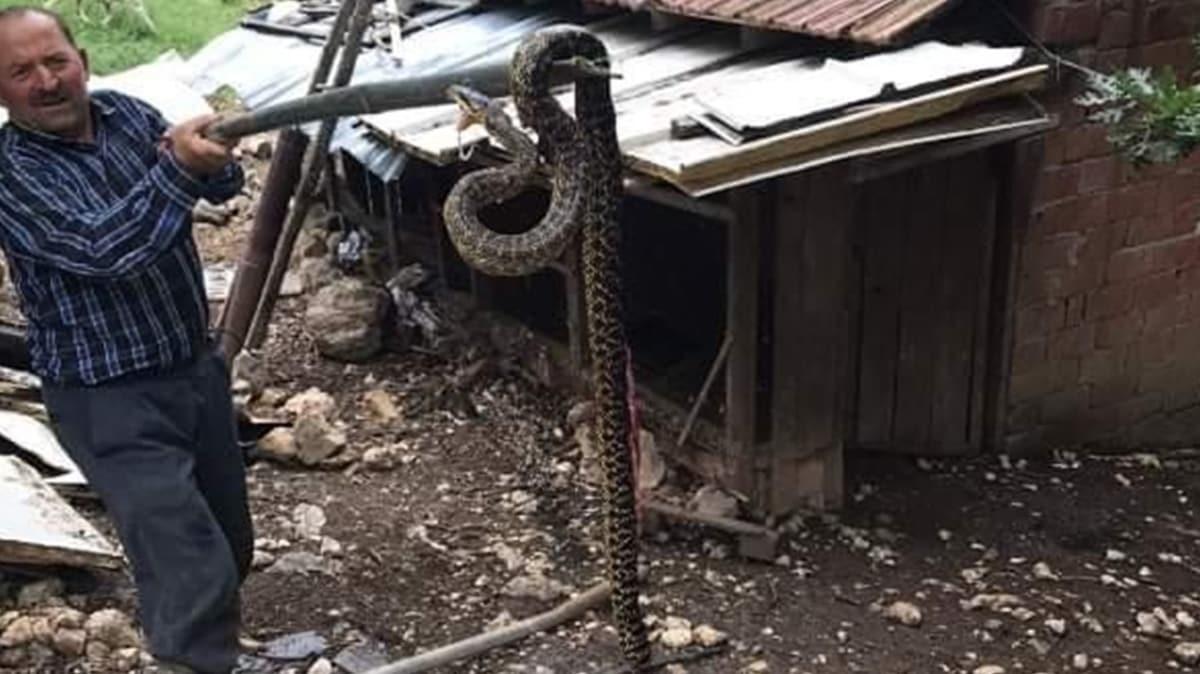 Köylüler panik içinde: Kümeste 2.5 metre boyunda yılan yakaladı