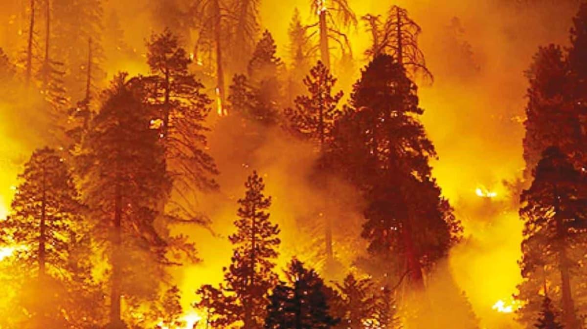 TikTok'çu hokkabaz ormanı yaktı