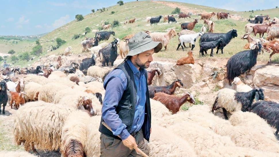 10 bin liraya çalışacak çoban bulamıyor
