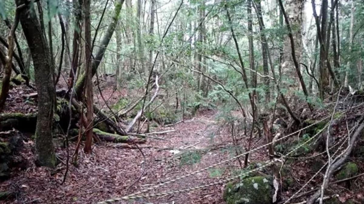 İntihar ormanı olarak bilinen yerde Türk vatandaşlar intihar vakasıyla karşılaştı