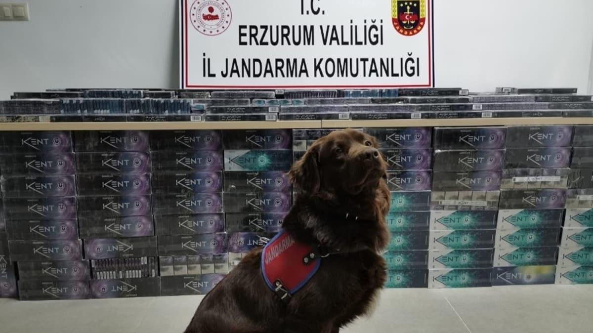 Erzurum'da 5 bin 200 paket kaçak sigara ele geçirildi