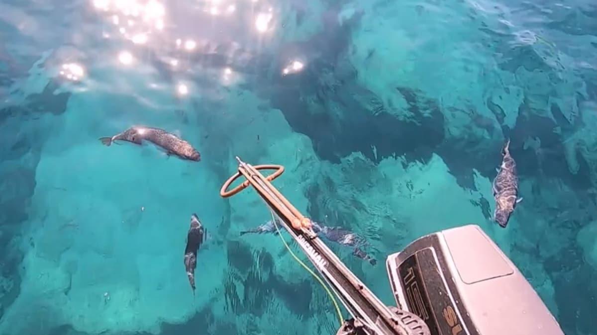 Yer Antalya... Çekim yaparken balon balığı parmağını koparıyordu