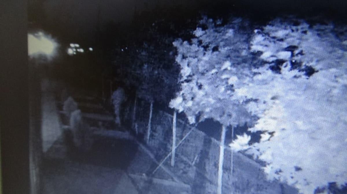 Diyarbakır'da bir garip hırsızlık! Yıllarca gözü gibi baktığı ağaçları çalındı
