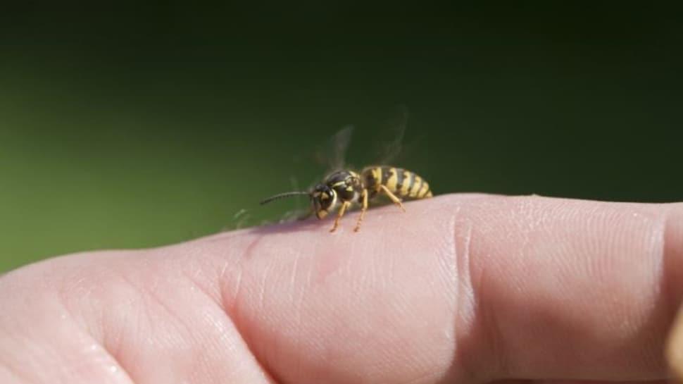 """Birçok kimse yanlış biliyor: Arı sokmalarına karşı ne yapılmalı"""""""