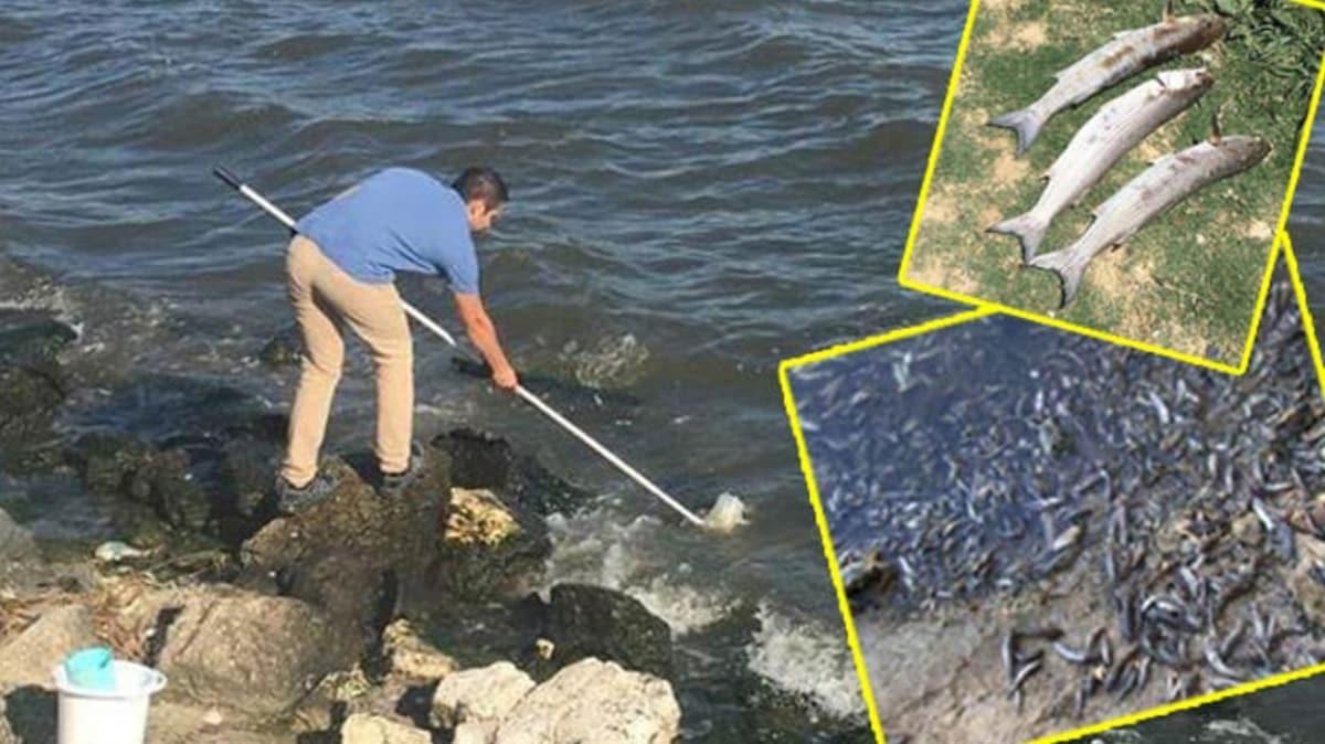 Küçükçekmece Gölü'nde yaşanan balık ölümleri bakanlığı harekete geçirdi