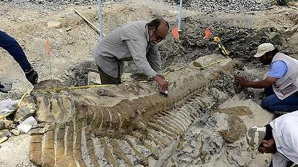 70 milyon yıl önce yaşamış bir baslık fosili bulundu
