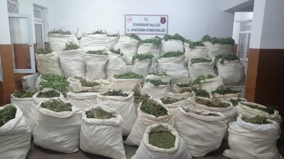 Narkoterör operasyonlarında rekor sayı: 2 günde 10 milyon 110 bin kök kenevir ele geçirildi!