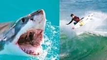 17 yaşındaki sörfçü köpekbalığı kurbanı