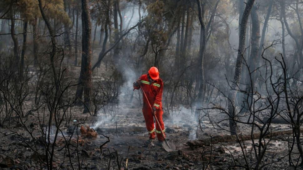Heybeliada'daki orman yangını şüphelisi tutuklandı