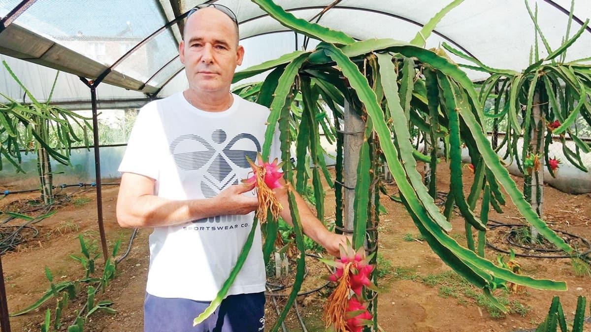 Tayland'da gördü, Aydın'da yetiştirdi! Ejder meyvesinin tanesi 15 lira