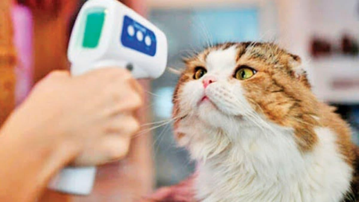 İngiltere'de ilk! Ev kedisine virüs teşhisi