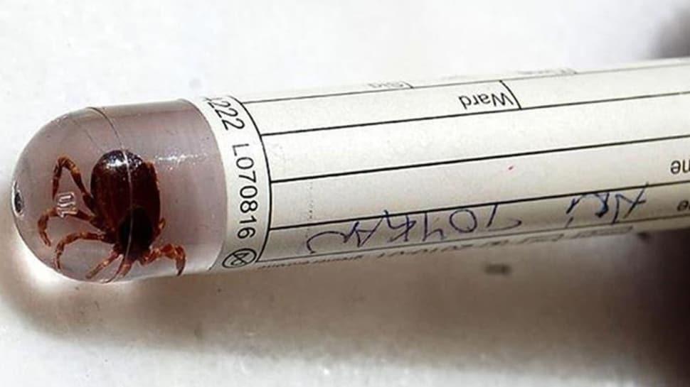 Kırım Kongo Kanamalı Ateşi (KKKA) aşısında sona doğru... 'Eylülde insanlar üzerinde denenecek'