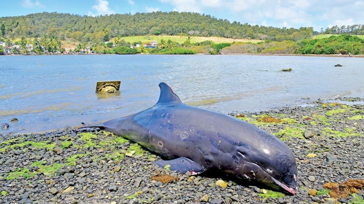 Mauritius'ta 17 yunus karaya vurdu! Petrol faciasında bilanço ağırlaşıyor
