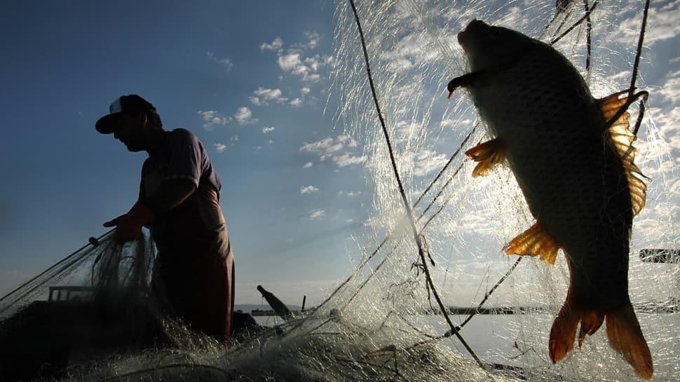 Su ürünleri av sezonu Başkan Erdoğan'ın katılımıyla bu gece yarısı itibarıyla açılacak
