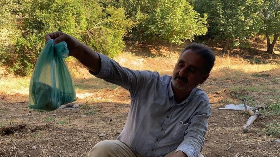 Türkiye'de en zehirli tür olarak bilinen engerek yılanını eliyle yakaladı