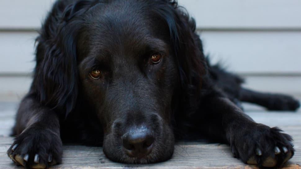 """Rüyada köpek ısırması nedir"""" Rüyada köpek görmek ne anlama geliyor"""""""
