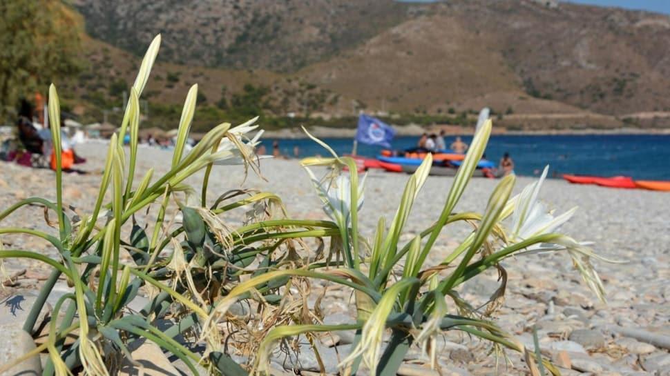 Kum zambaklarını koparan yandı: 73 bin TL cezası var