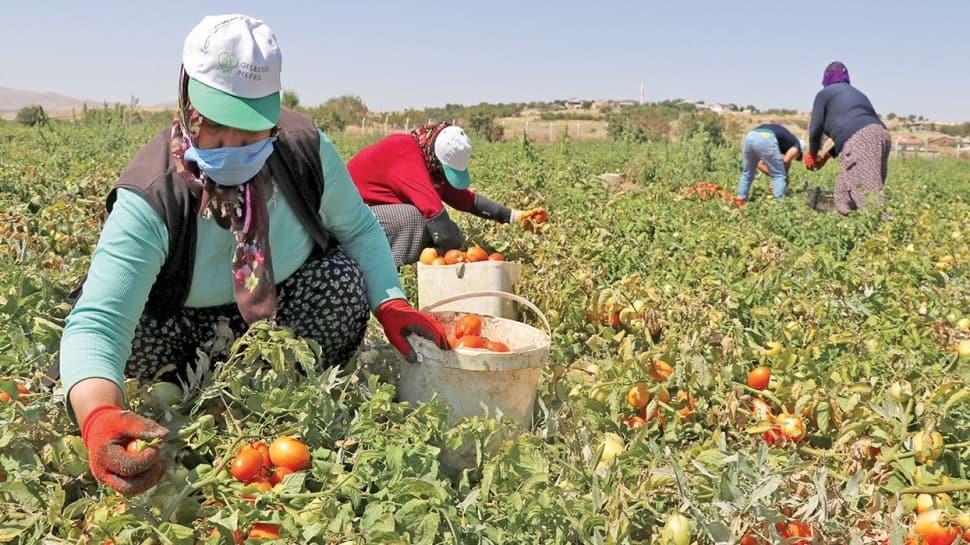 Üretime kazandırılan arazilerde verim arttı