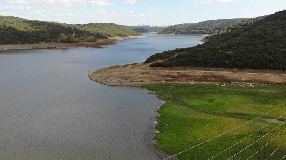 Alibeyköy barajında ürküten görüntü: Sular çekildi, hayvanlar otluyor