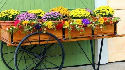 Sonbaharda yetişen balkon çiçekleri