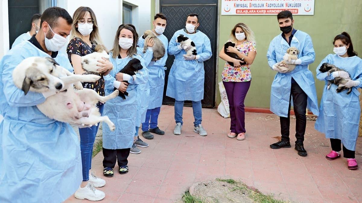 Pandemi savaşçılarının maskotu! Pamuk ve yavruları