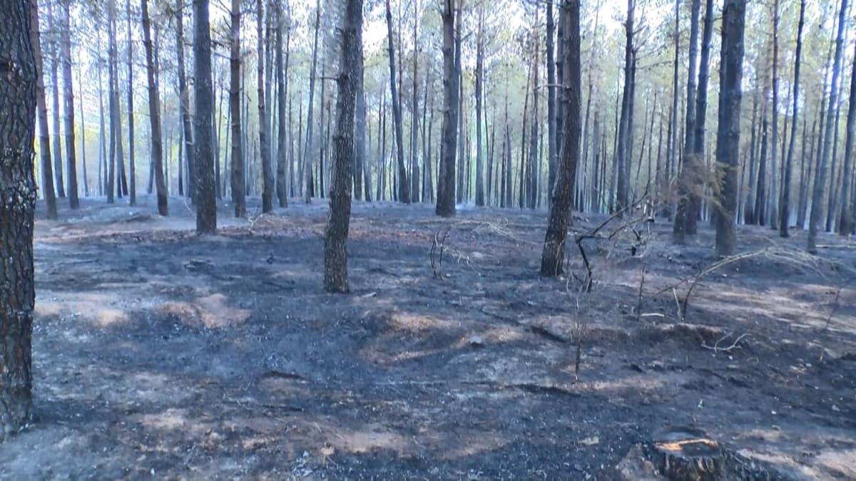 Pendik'te ormanlık alanda yangın: Soruşturma başlatıldı