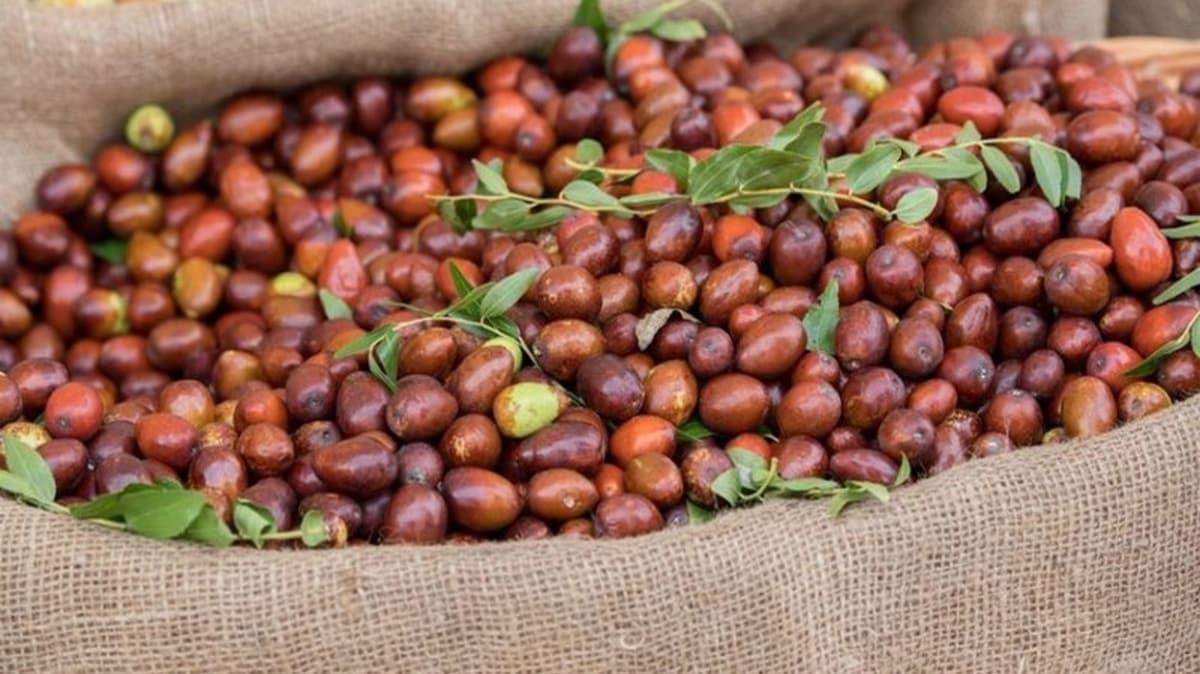 """Hünnap nasıl yenir, ne için kullanılır"""" Hünnap meyvesinin faydaları nelerdir"""""""