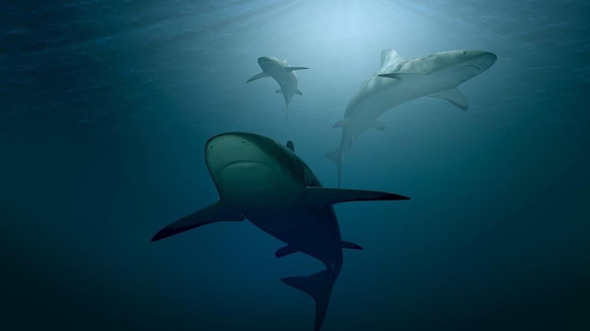 """ABD'den korkutan koronavirüs açıklaması: """"Aşı çalışmalarında yarım milyon köpek balığı katledilebilir"""""""