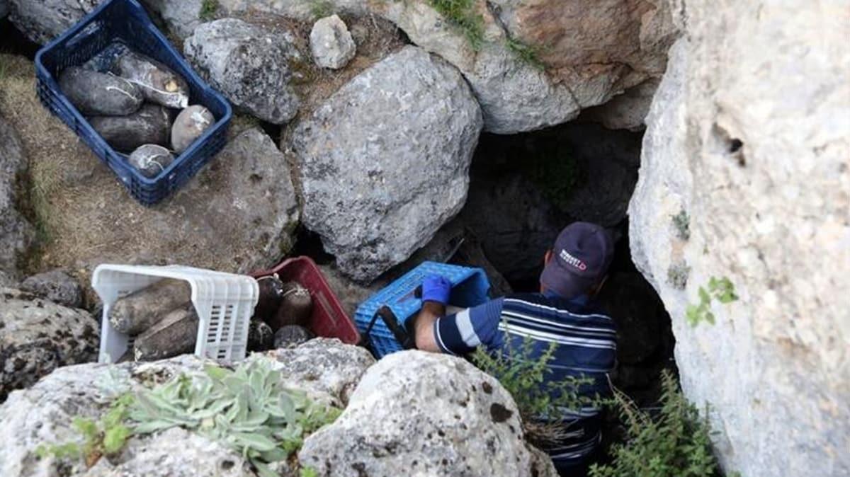 5 aydır olgunlaşması için bekletiliyor: Mağaralara indirilen obruk peynirleri çıkarıldı