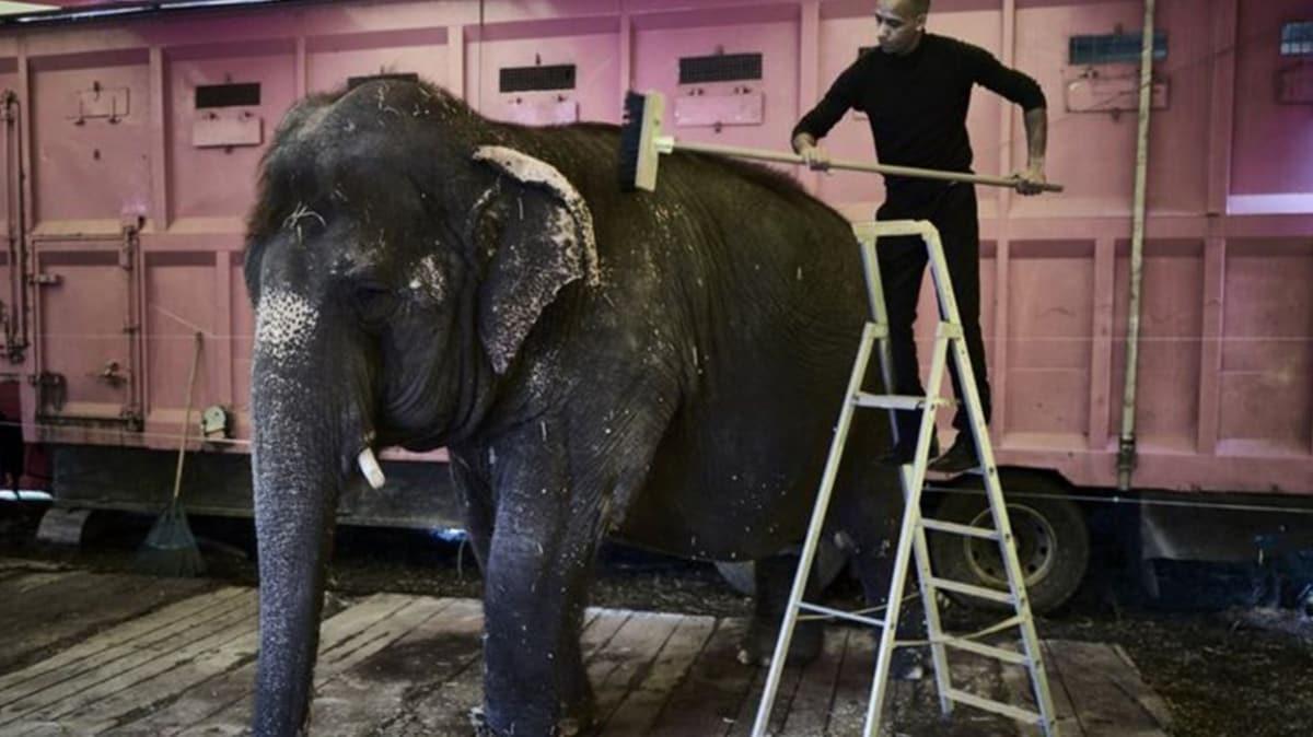 Fransa'da vahşi hayvanların sirklere çıkması kademeli olarak yasaklanacak