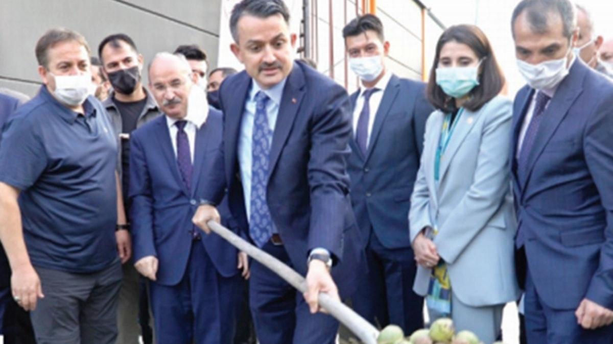 Ceviz ithalatını azaltacak  fabrika Manisa'da açıldı