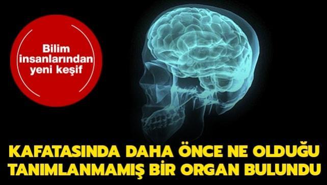 Bilim insanlarından yeni keşif... Kafatasında yeni bir organ buldular