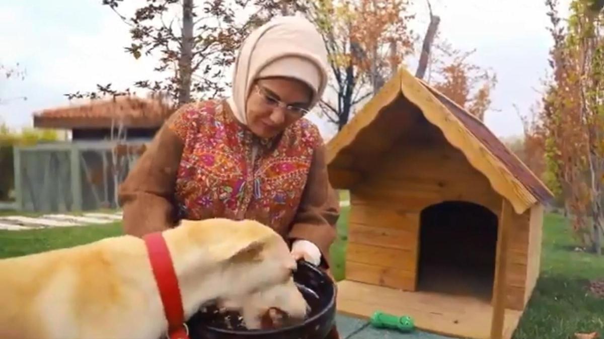 """Emine Erdoğan'ın sahiplendiği """"Leblebi"""", Külliye bahçesinde"""