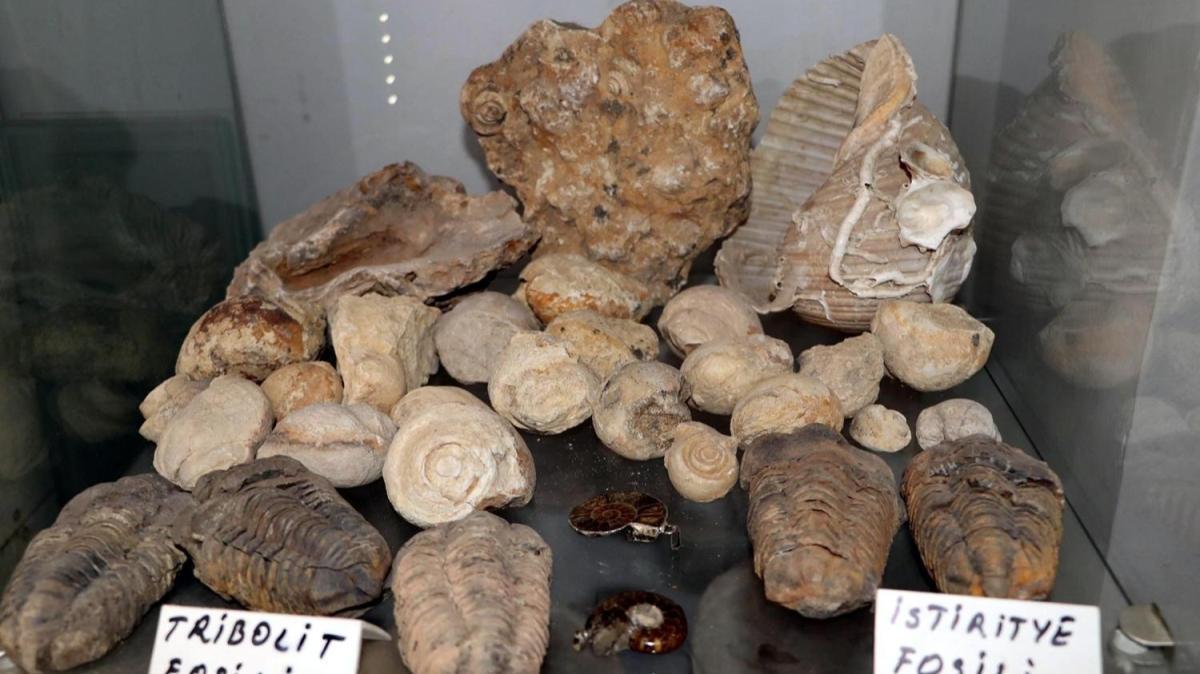 Tam 550 milyon yıl öncesine ait: Kolye yapmak için dağ-tepe dolaşırken buldu