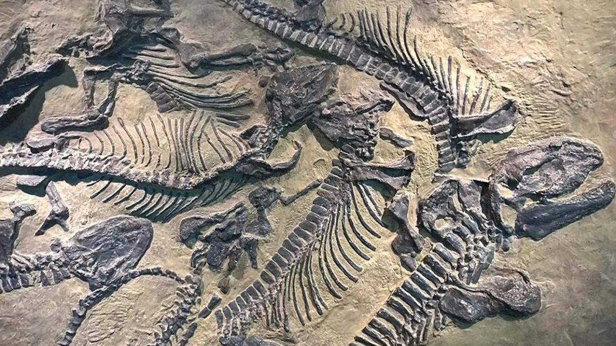 Arjantin'de 70 milyon yıllık dinozor fosilleri ile yüzlerce yumurta kalıntısı bulundu