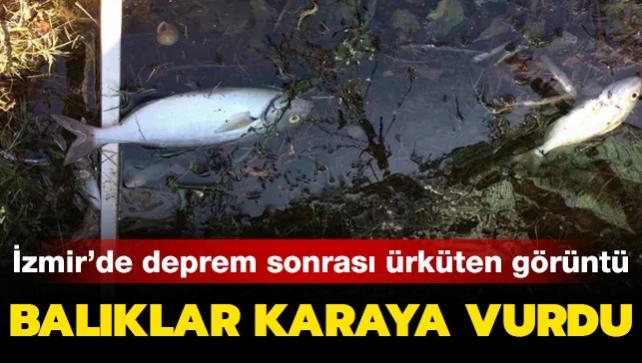 İzmir'de deprem sonrası ürküten görüntü: Balıklar karaya vurdu