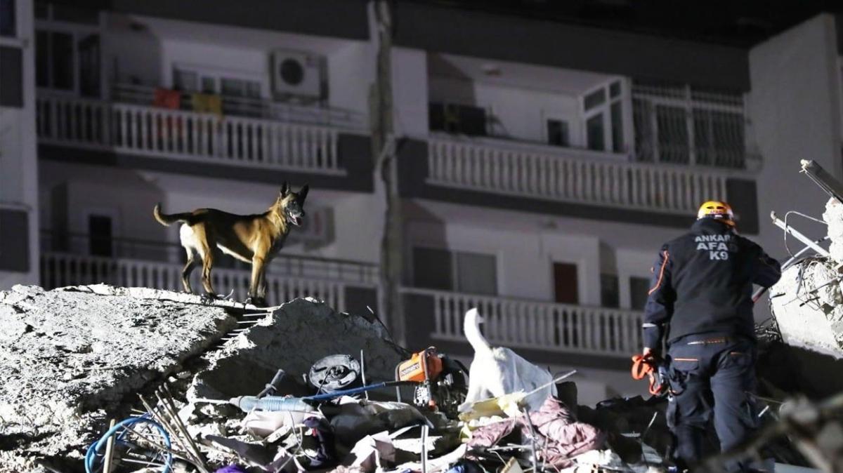 Depremin isimsiz kahramanları: AFAD arama kurtarma köpekleri