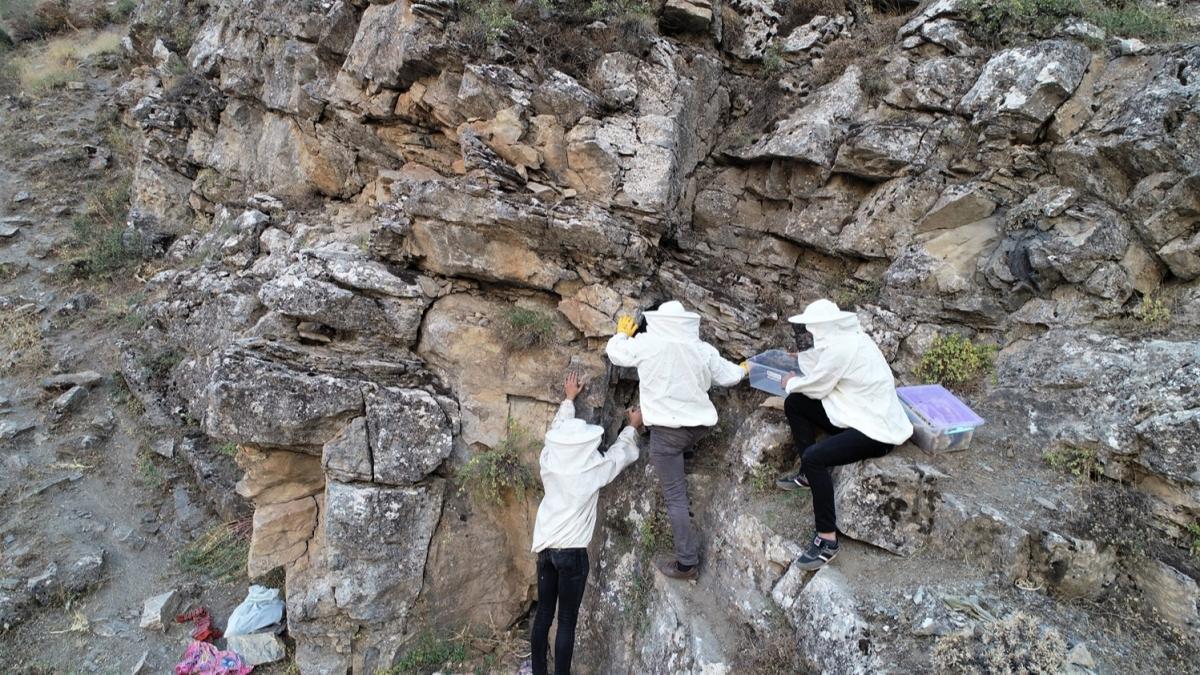 Her türlü tehlikeyi göze alarak çıkarıyorlar: Şifa kaynağı kaya balına yoğun talep