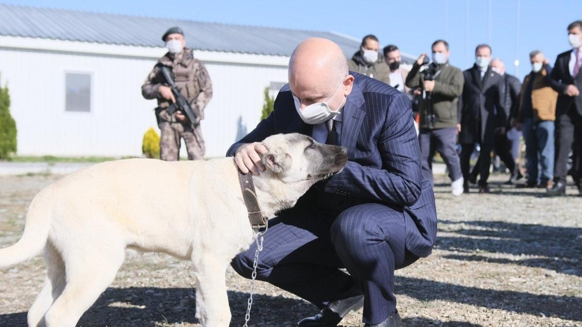 Bakan Karaismailoğlu açıkladı: Tüm şantiyelere hayvan barınağı