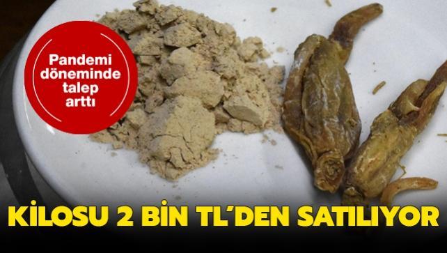 5 bin yıldır tedavi için kullanılan ginsengin kilosu 2 bin TL