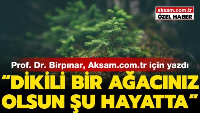 Prof. Dr. Birpınar, Aksam.com.tr için yazdı: Dikili bir ağacınız olsun şu hayatta