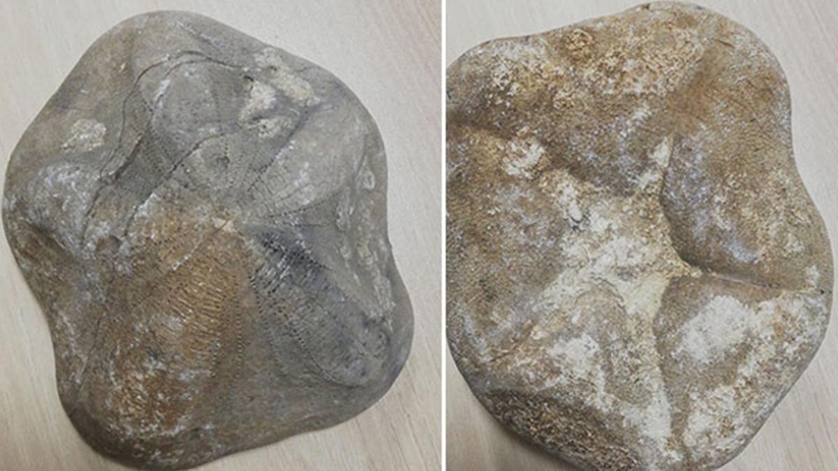 Çanakkale'de milyonlarca yıl öncesine ait 2 fosil ele geçirildi