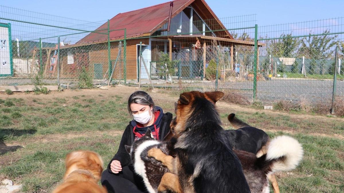 Otomotiv sektörünü bırakıp köyde köpek oteli açtılar
