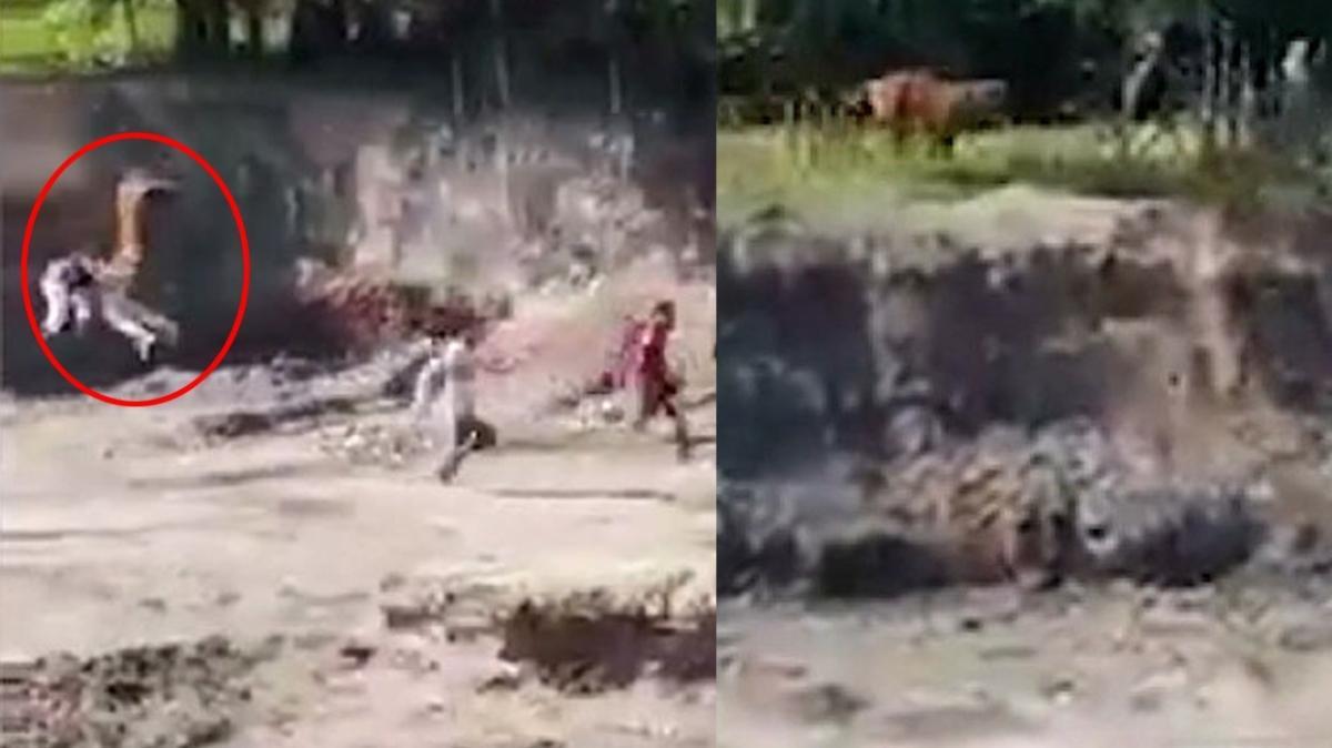 Hindistan'da kaplan dehşeti! Kasaba sakinlerine saldırdı