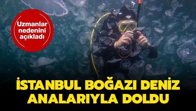 İstanbul Boğazı deniz analarıyla doldu... Uzmanlar nedenini açıkladı